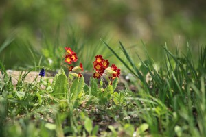 ひっそりと咲き賑わう